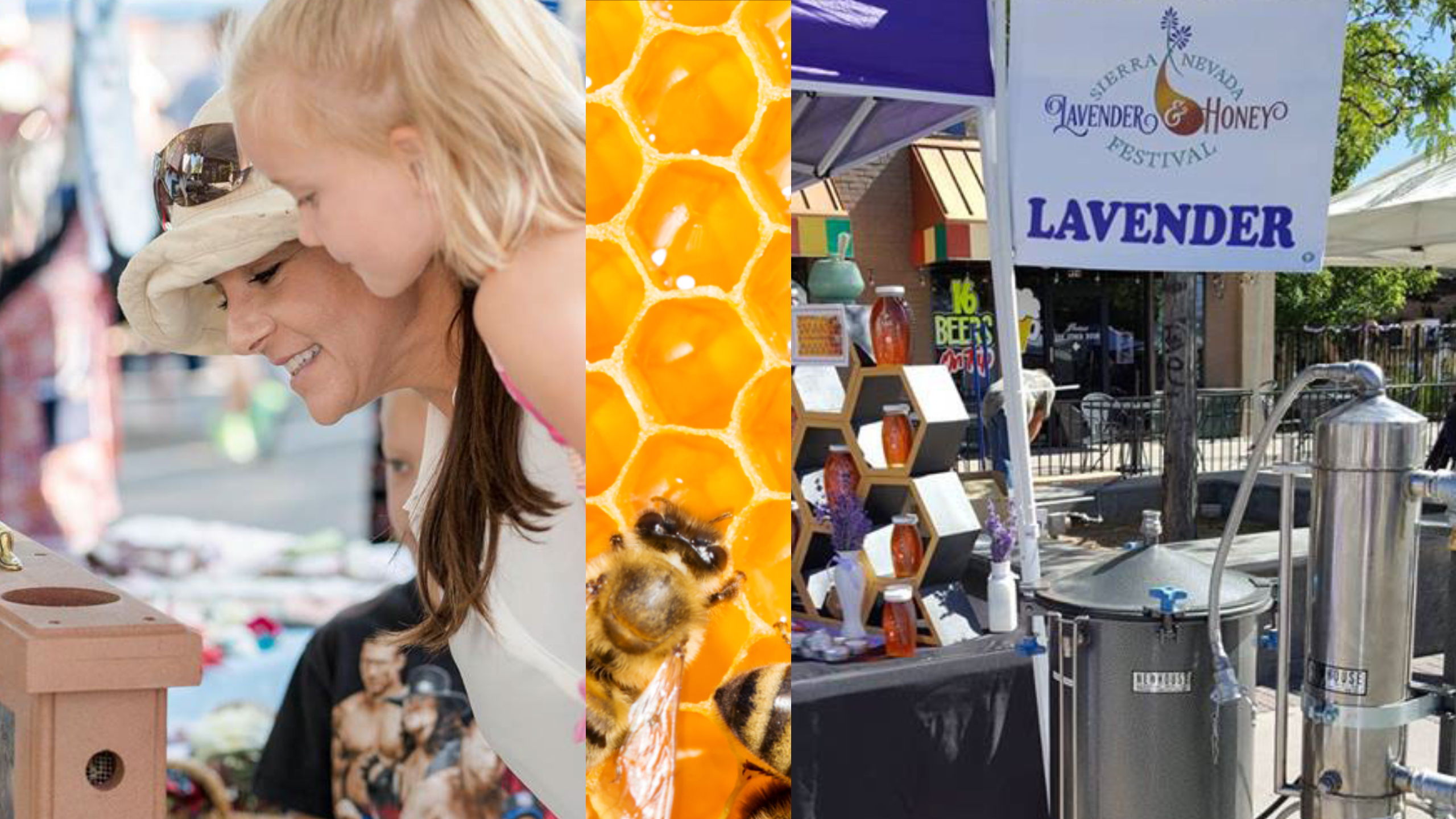 Festival Highlights – Sierra Nevada Lavender and Honey Festival